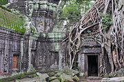 Sami Sarkis Posters - Tree roots on ruins at Angkor Wat Poster by Sami Sarkis