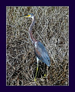 Rosanne Jordan - Tri Colored Heron