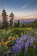 Greg Vaughn - Tronsen Ridge Wildflowers