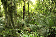 Tropical Rainforest Art - Tropical jungle by Les Cunliffe