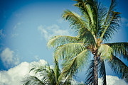 Palm Trees Fronds Posters - Tropical Paradise Poster by Sharon Mau