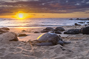 Laniakea Beach Posters - Turtle Beach sunset Oahu Hawaii Poster by Jianghui Zhang