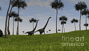 Tree Creature Framed Prints - Two Mamenchisaurus Walking Framed Print by Kostyantyn Ivanyshen