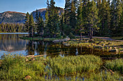 Pine Trees Art - Uinta Mountains Utah by Utah Images