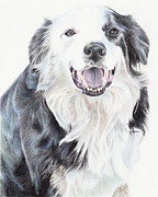 Sheepdog Drawings - Untitled  by Stephen Bohlen