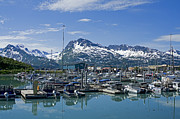 Sail Fish Prints - Valdez Harbor Print by Nick  Boren