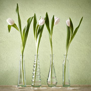 Tulips Pyrography Posters - Waiting For Spring Poster by Steffen Gierok
