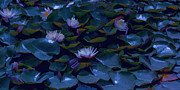 Waterlily Poster Posters - Water Lilies Poster by Bonnie Bruno