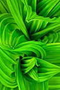 Wavy Green Print by Jeff Sinon