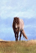 Rachel Stribbling - Welsh Pony Painting