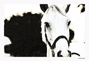 Mustang Pyrography Prints - White beauty Print by Anusha Hewage