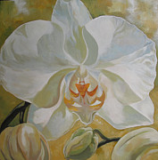 Alfred Ng - white phalaenopsis orchid