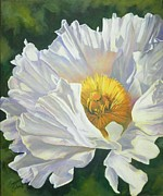 Blossom Originals - White Poppy by Suzanne Schaefer
