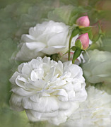 Rose Bud Posters - White Roses Bouquet Poster by Jennie Marie Schell