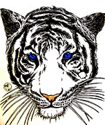Justin Moore Drawings Prints - White Tiger Print by Justin Moore