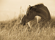 Grass Metal Prints - Wild Horse on the Beach Metal Print by Diane Diederich