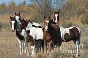 Mark Newman - Wild Horses Amargosa Desert Nevada