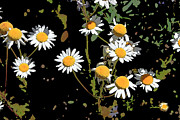 Rick Thiemke - Wildflowers