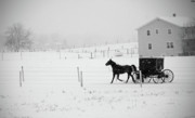 Horse And Buggy Framed Prints - Winter Buggy Framed Print by David Arment