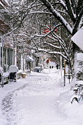 Small Towns Metal Prints - Winter In The Grove Metal Print by William Walker
