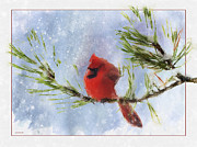 Pine Digital Art Framed Prints - Winter Perch Framed Print by Ron Jones