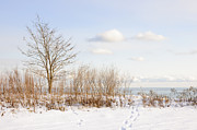 Snowy Tree Posters - Winter shore of lake Ontario Poster by Elena Elisseeva