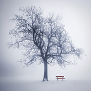 Tree Trunks Metal Prints - Winter tree in fog Metal Print by Elena Elisseeva