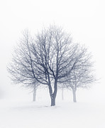 Silhouettes Photo Prints - Winter trees in fog Print by Elena Elisseeva