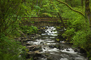 Columbia River Prints - Wooded Stream in the Spring Print by Andrew Soundarajan