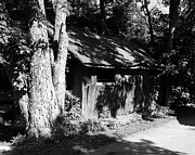 Sheds Photos - Woodshed Shadows by Mel Steinhauer