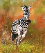David Stribbling - Zebra