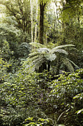 Tropical Forest Prints - Tropical forest Print by Les Cunliffe
