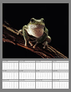 Save Frogs Posters - 2013 Calendar - Gray Treefrog Poster by Sami A