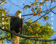 Eleanor Abramson - 2014 Bald Eagle Calendar