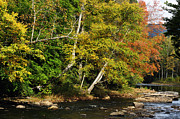 Williams Photos - Fall along Williams River by Thomas R Fletcher