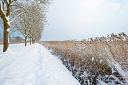 Flevoland Art - Snowy countryside in sunlight by Jan Marijs
