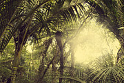 Spring Scenery Art - Tropical forest by Les Cunliffe