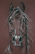 Horse Drawing Posters - Arabian Horse  Poster by Angel  Tarantella