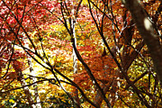 Fall Foliage Photos - Autumn by Les Cunliffe