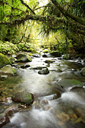 Creek Prints - New Zealand  Print by Les Cunliffe