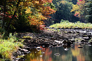 Williams River Scenic Backway Posters - Williams River Autumn Poster by Thomas R Fletcher