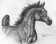 Animals Drawings - Arabian Horse  by Angel  Tarantella