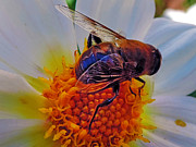 Elvira Ladocki - 2397-bee On Dahlia