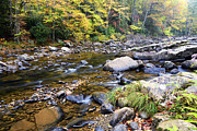 Williams River Scenic Backway Prints - Williams River Autumn Print by Thomas R Fletcher