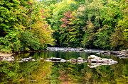 Williams River Scenic Backway Prints - Fall along Williams River Print by Thomas R Fletcher