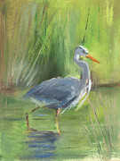 Grey Heron Framed Prints - RCNpaintings.com Framed Print by Chris N Rohrbach