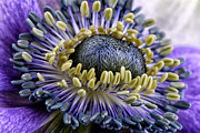 Mark Johnson - Anemone