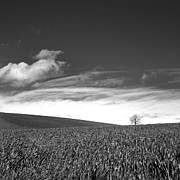 Wheat Photos - Agricultural landscape by Bernard Jaubert