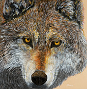 Wolf Paintings - Alpha by Debbie Chamberlin