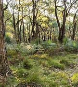 Tim Hester - Australian Landscape